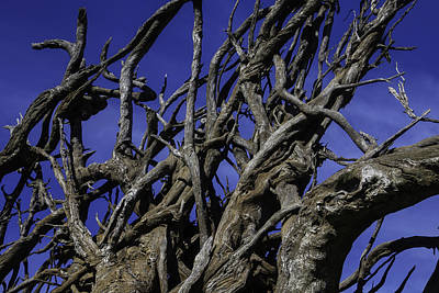 Tree Roots Photograph - Weathered Tree Roots by Garry Gay