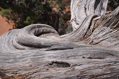 Photograph - Weathered Tree Trunk by Frank Madia