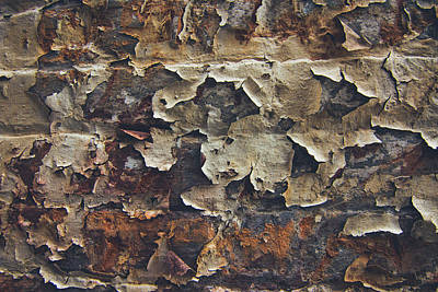 Photograph - Weathered Wall by Scott Meyer