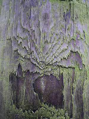 Photograph - Weathered Wood And Lichen Abstract by Richard Brookes