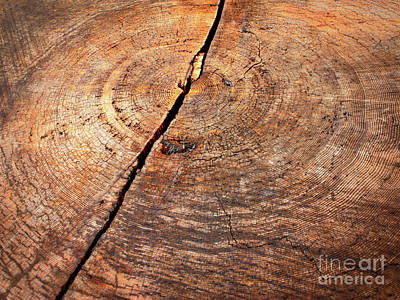 Photograph - Weathered Wood On Old Tree by Carol Groenen