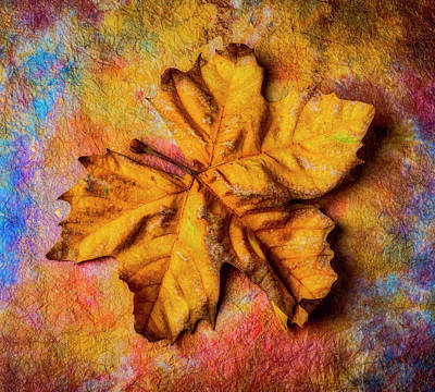 Photograph - Weathered Worn Autumn Leaf by Garry Gay