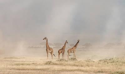 Savannah Photograph - Weathering The Amboseli Dust Devils by Jeffrey C. Sink