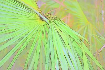 Photograph - Weave Me A Palm by Florene Welebny