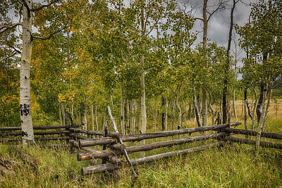 Photograph - Weaving Thru The Trees by Jon Glaser