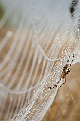 Photograph - Web Administrator by Robert Potts