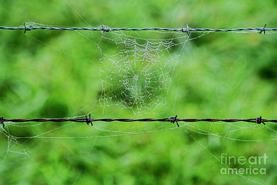 Photograph - Web And Wire by David Arment