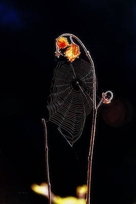 Photograph - Web by Bob Orsillo