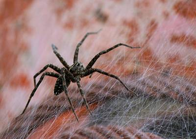 Photograph - Web by David Pickett