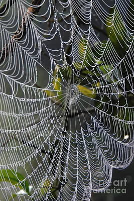 Photograph - Web Design by Myrna Bradshaw