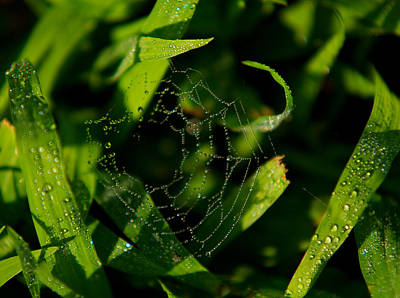 Photograph - Web In Dew by Bibi Rojas