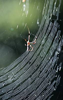 Photograph - Web In Early Light by Warren Thompson
