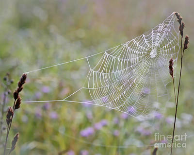Photograph - Web In The Wildflowers by Kerri Farley
