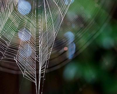 Photograph - Web Light by Patricia Strand