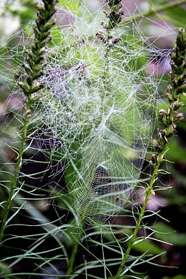 Photograph - Web Master by Teresa Mucha