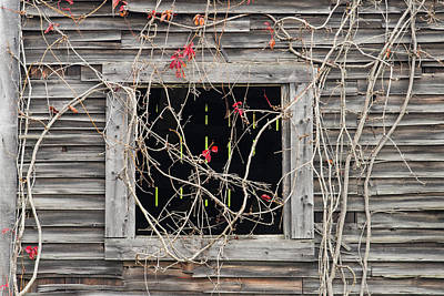 Photograph - Web Of Branches by Michael Blanchette