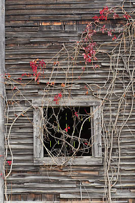Photograph - Web Of Branches - Vertical by Michael Blanchette