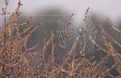 Photograph - Web Of Diamonds  by Robin Street-Morris