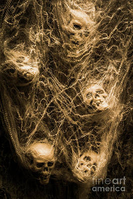 Skull Photograph - Web Of Entrapment by Jorgo Photography - Wall Art Gallery