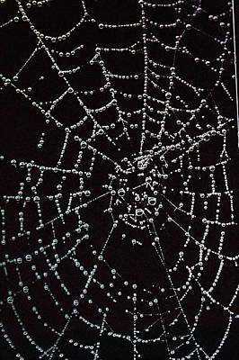Web Of Pearls Art Print by Rebecca Fitzgerald