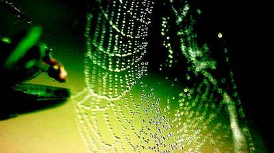 Photograph - Web Portrait II by Maria  Wall