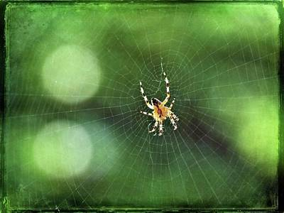 Photograph - Web Spinner by Patricia Strand