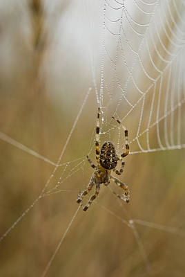 Photograph - Web Walker by Robert Potts