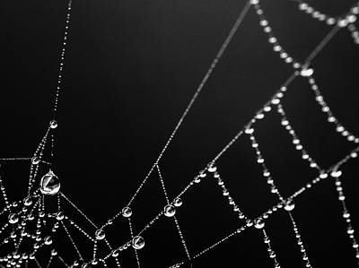 Photograph - Web Water 1 by Rebecca Cozart