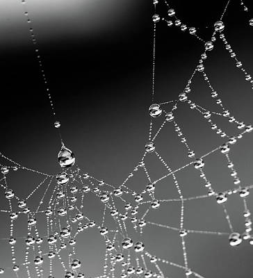 Photograph - Web Water 2 by Rebecca Cozart