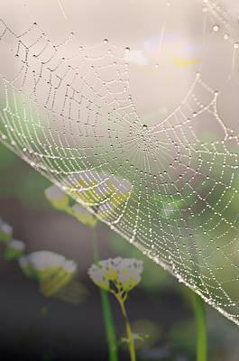 Photograph - Web With Thousand Dew Drops By Pedro Cardona by Pedro Cardona Llambias