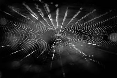 Photograph - Webbed by Christopher L Thomley