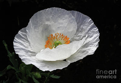 Poppy Wall Art - Photograph - Wedding Gown by Gary Wing