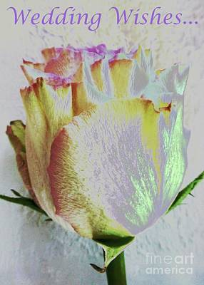 Photograph - Wedding Wishes Rose by Barbie Corbett-Newmin