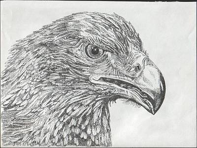 Wedgetail Eagle Art Print by Leonie Bell
