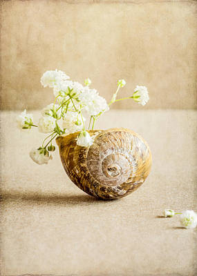 Photograph - Wee Vase by Colleen Farrell