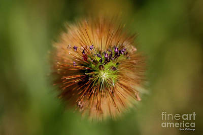 Photograph - Weed Flowers Grass Agriculture Farming Art by Reid Callaway