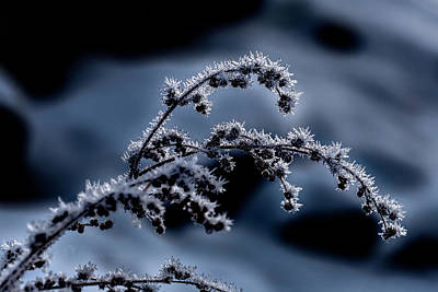 Photograph - Weed Frost November 2016 by Fred Denner