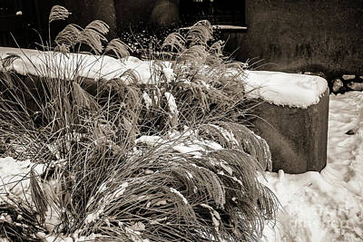 Weeds And Snow Print by Jon Burch Photography