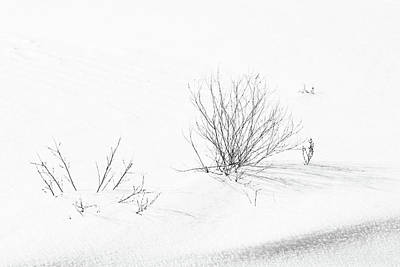 Photograph - Weeds In Snow by Mary Bedy