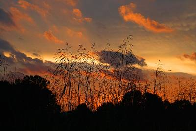Photograph - Weeds In The Sunset 1 by Kathryn Meyer