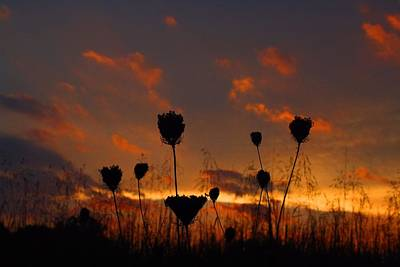 Photograph - Weeds In The Sunset 2 by Kathryn Meyer