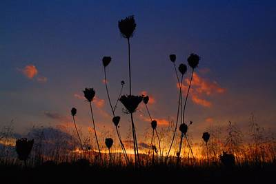 Photograph - Weeds In The Sunset 3 by Kathryn Meyer