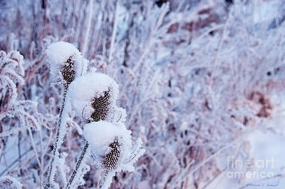 Photograph - Weeds In Winter by David Arment