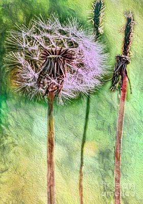 Photograph - Weeds by Jean OKeeffe Macro Abundance Art