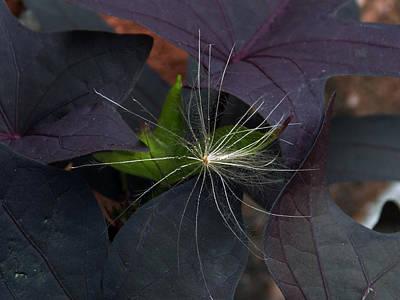 Weeds N Seeds Art Print