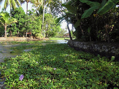 Photograph - Weeds, Plants, Boats And Lots Of Greenery On A Coastal Saltwater by Ashish Agarwal