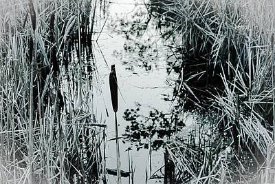 Photograph - Weeds, Reeds And Still Water Bw by Desmond Raymond