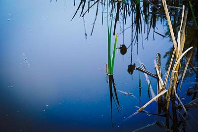Photograph - Weeds, Reeds And Still Water No.2 by Desmond Raymond