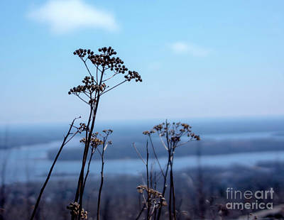 Photograph - Weeds by Tina Hailey