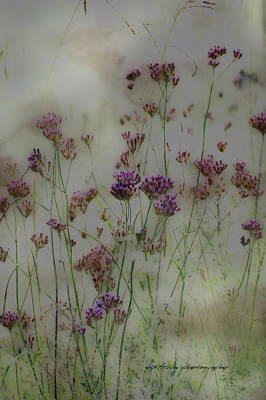 Digital Art - Weeds by Vicki Ferrari